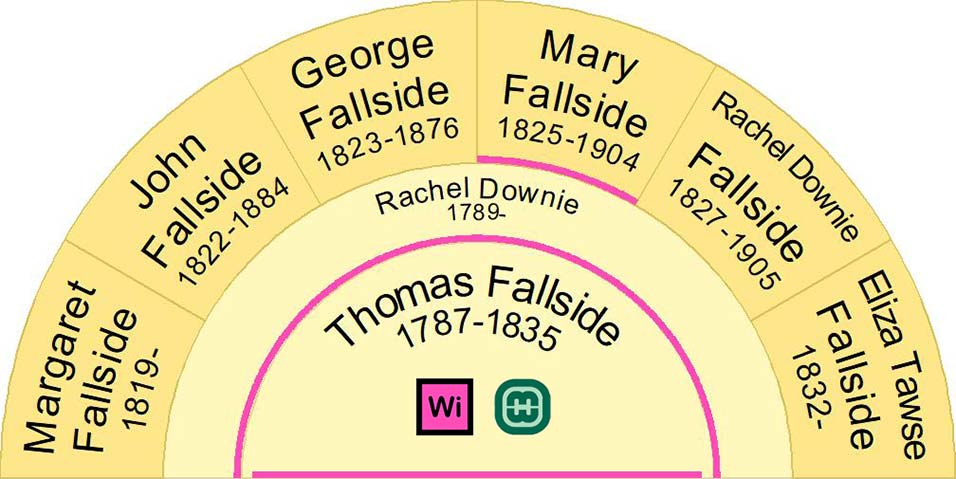 Half Fan Chart showing the children of Thomas Fallside and Rachel Downie