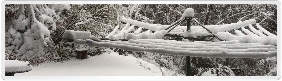 Photograph of our backyard showing a clothesline full of snow